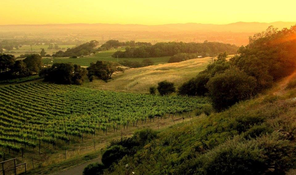 "Santa Rosa in Sonoma County, ""The Heart Of The Wine Country"""